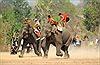 Tưng bừng hội đua voi