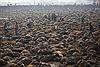 Kinh hãi lễ tế 5.000 con trâu ở Nepal