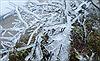 Tuyết rơi dày đặc ở Khu du lịch Mẫu Sơn