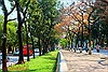 Con đường lãng mạn nhất Hà Nội vào mùa lá đỏ đẹp như châu Âu