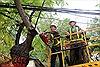 Hà Nội cắt tỉa cây xanh trước mùa mưa bão