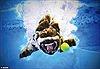 Hình ảnh ấn tượng về chó ở dưới nước