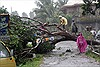 Bão Bopha tàn phá Philippines, 238 người chết