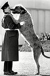 Tình bạn giữa người lính và những chú chó