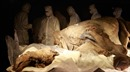 Nga bắt đầu nhân bản động vật thời tiền sử