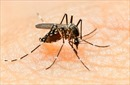 Diệt muỗi để phòng tránh bệnh do vi rút Zika