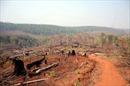 Hàng trăm ha rừng nguyên sinh bị triệt hạ