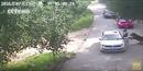 Tự ý rời khỏi xe, khách tham quan bị hổ Amur vồ chết