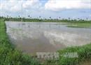 Có hay không bán đất trái thẩm quyền tại Nam Định