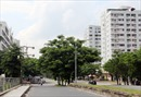 Thông tin ban đầu về nguyên nhân gây mùi hôi thối ở Nam Sài Gòn