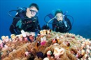 Bảo vệ rạn san hô gắn với phát triển du lịch