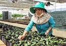 Đa dạng hóa cây trồng thích ứng với biến đổi khí hậu