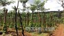 Cấp cứu người bị thương trong vụ nổ súng tranh chấp đất rừng
