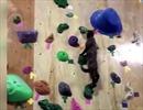 """Thán phục """"mèo nhện"""" chơi thể thao leo tường"""