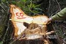 60 người bị kỷ luật vì để mất rừng