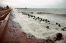 Cảnh báo về áp thấp trên khu vực nam Biển Đông
