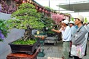 Nghệ nhân bonsai ở đất Tây Đô