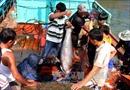 Ngư dân Phú Yên vươn khơi xa, ăn Tết trên biển