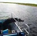 Giật mình cá sấu gần 2m chồm lên thuyền của du khách