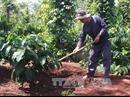 Đắk Lắk cần chú trọng phát triển các loại cây trồng chiến lược