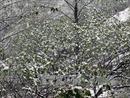 Nhiệt độ tại Sa Pa giảm sâu còn 4,8 độ C