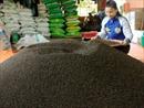 Gia Lai kêu gọi đầu tư xây dựng 4 nhà máy chế biến tiêu sạch