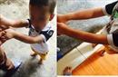 Xác minh việc bé 4 tuổi bị hiệu trưởng thả vào máy vặt lông gà