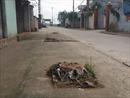 Hà Nội yêu cầu kiểm soát việc chặt cây xanh khi giải tỏa vỉa hè