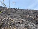 Rừng Đắk Nông bị phá nghiêm trọng, chính quyền chậm vào cuộc