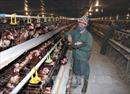 Giá thực phẩm và rau xanh có dấu hiệu phục hồi