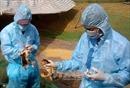 Thủ tướng chỉ đạo tập trung phòng chống cúm gia cầm