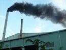 Khí thải từ nhà máy luyện đồng làm chết dứa của người dân xã Bản Lầu