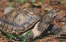 Bắt giữ xe khách chở 33kg rùa có tên trong sách đỏ