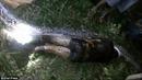 Ghê rợn cảnh mổ bụng trăn dài 7 mét phát hiện xác người