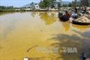Nước biển màu vàng lạ ở cảng Chân Mây - Lăng Cô là do tảo nở hoa