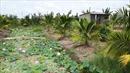 Chuyển đổi từ đất vườn sang đất ở, thủ tục như thế nào?