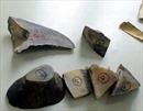 8 khúc sừng tê giác bị phát hiện qua máy soi hải quan
