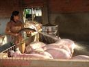 Thêm nhiều biện pháp đẩy mạnh tiêu thụ thịt lợn hỗ trợ người chăn nuôi