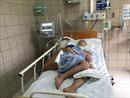 Rắn độc cắn, bệnh nhân tổn thương não nhập viện liên tiếp