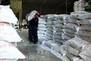 Xuất khẩu gạo 'ấm' lại sau một thời kỳ dài trầm lắng