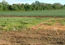 Có phải đăng ký khi hết thời hạn sử dụng đất nông nghiệp?