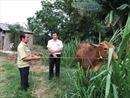 Nguồn vốn ưu đãi xóa nghèo bền vững ở xứ dừa
