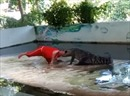 Đang biểu diễn, cá sấu bất ngờ ngoạm đầu huấn luyện viên