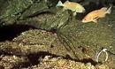 Phát hiện loại bọt biển có thể chữa ung thư tụy
