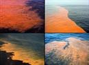 Vén màn bí mật 'thủy triều máu' lan rộng trên biển Baltic