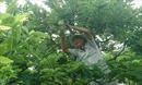 Huyền Sơn vào mùa na chín
