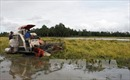Gần 7.000 ha lúa ngập úng do mưa lớn