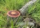 Lâm Đồng khởi tố 4 bị can phá rừng thuê với quy mô lớn