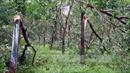 Nan giải bài toán quy hoạch cây cao su ở Quảng Trị