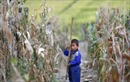 Triều Tiên thừa tên lửa, thiếu lương thực trầm trọng